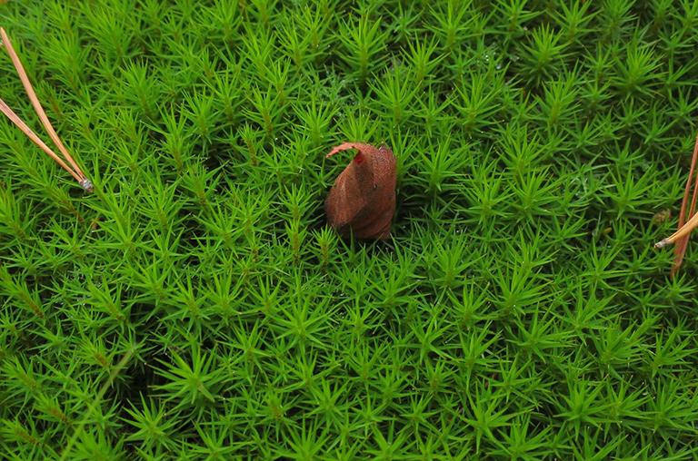 Sammaleenhiljainen
